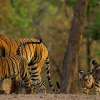 Pearls of Rajasthan Tour Package